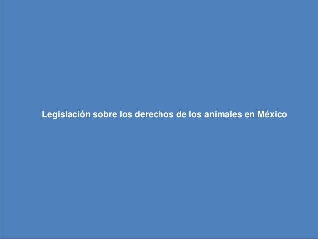 Legislación sobre los derechos de los         animales en México  Legislación sobre los derechos de los animales en México