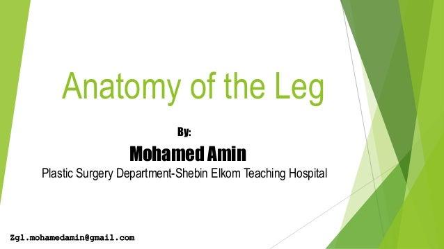 Anatomy of the Leg By: Mohamed Amin Plastic Surgery Department-Shebin Elkom Teaching Hospital Zgl.mohamedamin@gmail.com