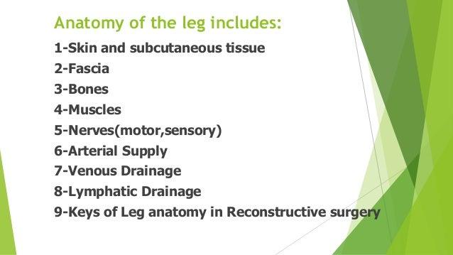 Anatomy of the Leg  Slide 2
