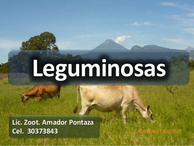 LeguminosasLic. Zoot. Amador PontazaCel. 30373843