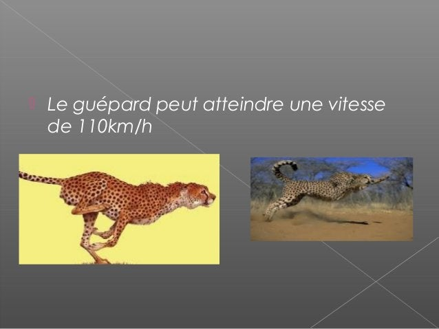    Le Guépard habite en Asie et dan s d    ´Sahara         Le Sahara.