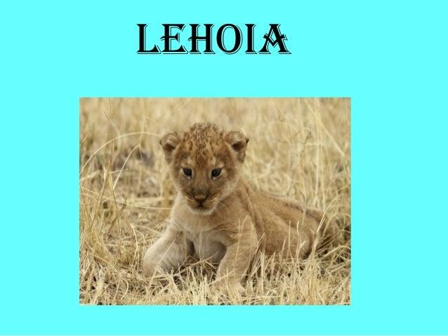 LEHOIA