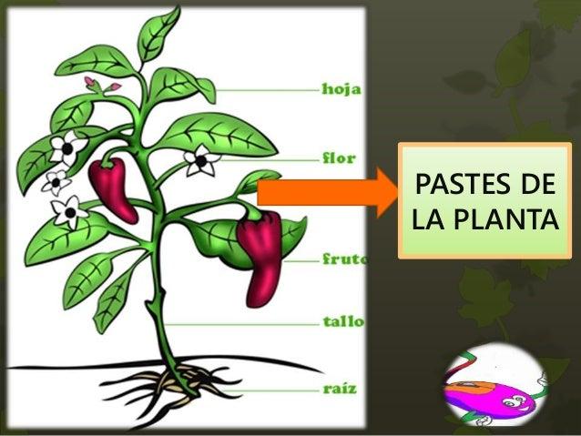 Las plantas y sus partes - Cosas sobre las plantas ...
