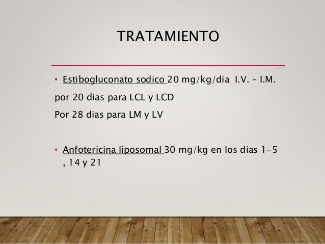 Las leptospiras son bacterias aerobias, con 6-20 μm de longitud y 0,1 μm de ancho, y un gancho terminal en uno o en ambos ...