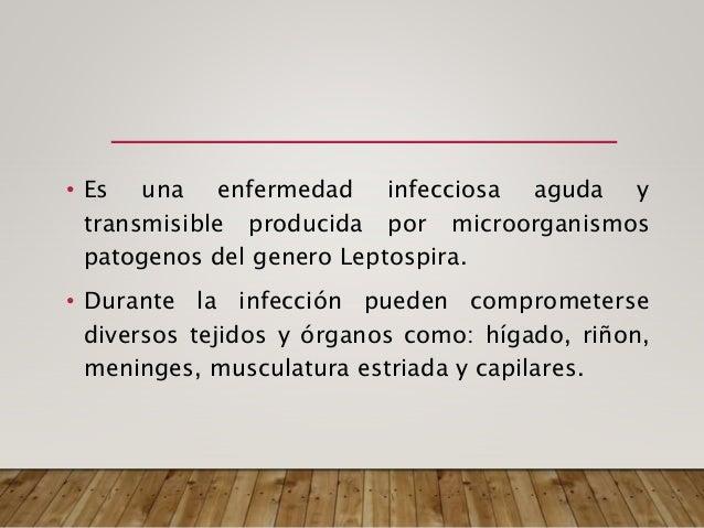 MECANISMO DE TRANSMISION • 1. Forma indirecta: Es la más frecuente y ocurre por contacto de las mucosas y/o piel con lesio...