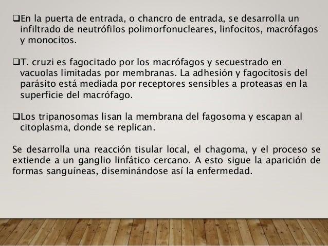 Enfermedad de Chagas Crónica Miocardiopatía: Se manifiesta como insuficiencia cardíaca congestiva, arritmia y eventos trom...