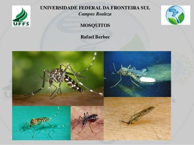UNIVERSIDADE FEDERAL DA FRONTEIRA SUL Campus Realeza MOSQUITOS Rafael Berbec