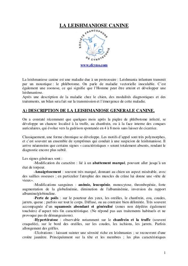 LA LEISHMANIOSE CANINE  www.sfcyno.com  La leishmaniose canine est une maladie due à un protozoaire : Leishmania infantum ...