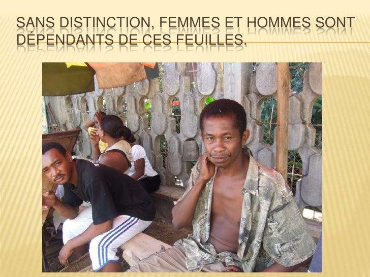 SANS DISTINCTION, FEMMES ET HOMMES SONTDÉPENDANTS DE CES FEUILLES.