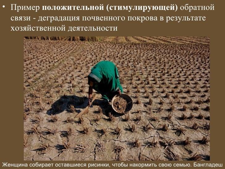 • Пример положительной (стимулирующей) обратной  связи - деградация почвенного покрова в результате  хозяйственной деятель...