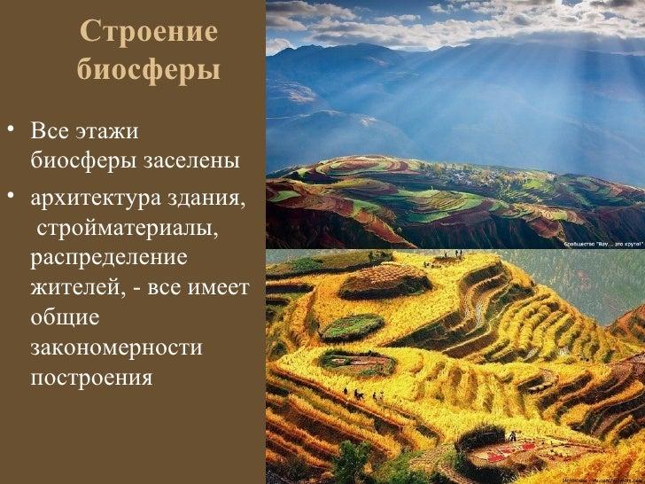 Строение      биосферы• Все этажи  биосферы заселены• архитектура здания,   стройматериалы,  распределение  жителей, - все...