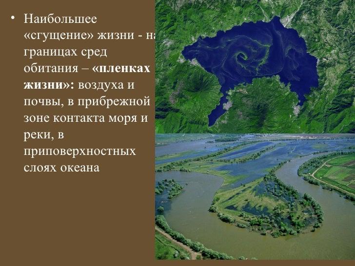 • Наибольшее  «сгущение» жизни - на  границах сред  обитания – «пленках  жизни»: воздуха и  почвы, в прибрежной  зоне конт...