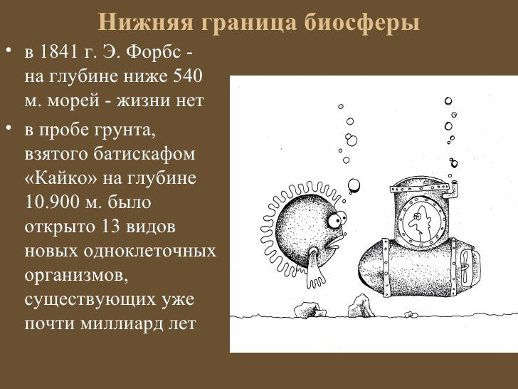 Нижняя граница биосферы• в 1841 г. Э. Форбс -  на глубине ниже 540  м. морей - жизни нет• в пробе грунта,  взятого батиска...