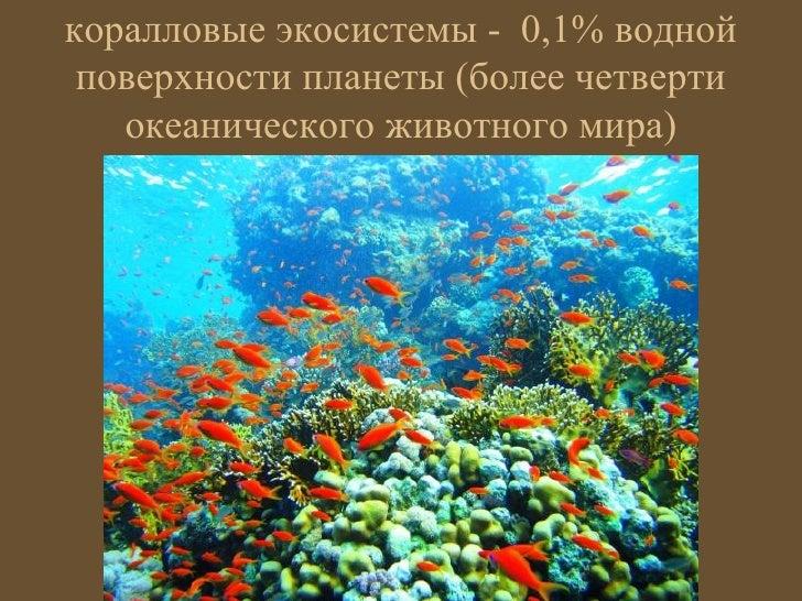 коралловые экосистемы - 0,1% водной поверхности планеты (более четверти   океанического животного мира)