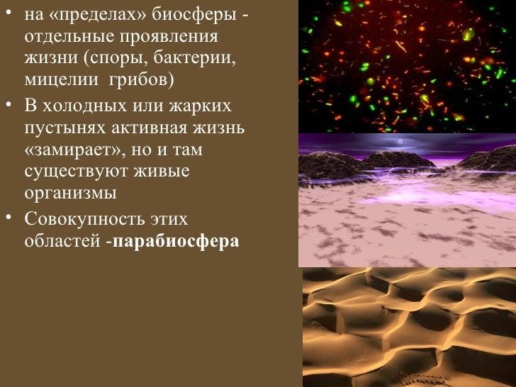 • на «пределах» биосферы -  отдельные проявления  жизни (споры, бактерии,  мицелии грибов)• В холодных или жарких  пустыня...