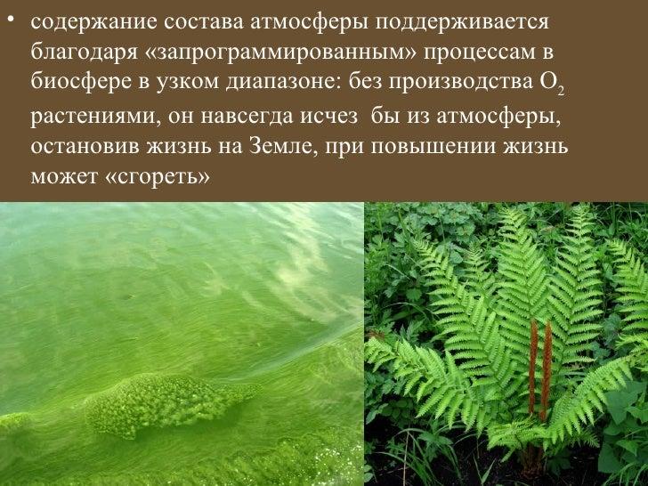 • содержание состава атмосферы поддерживается  благодаря «запрограммированным» процессам в  биосфере в узком диапазоне: бе...