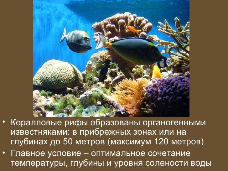 • Коралловые рифы образованы органогенными  известняками: в прибрежных зонах или на  глубинах до 50 метров (максимум 120 м...