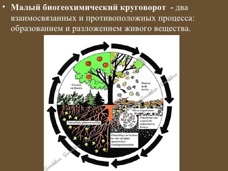 • Малый биогеохимический круговорот - два  взаимосвязанных и противоположных процесса:  образованием и разложением живого ...