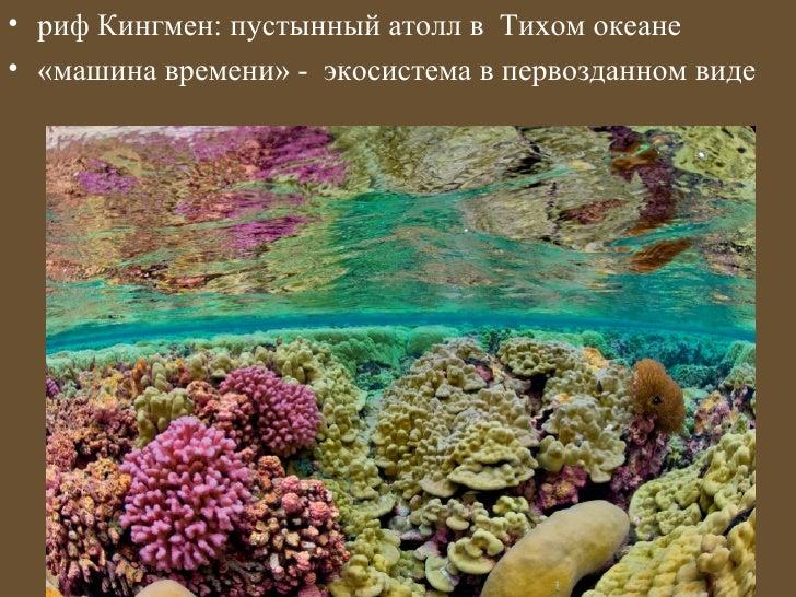 • риф Кингмен: пустынный атолл в Тихом океане• «машина времени» - экосистема в первозданном виде