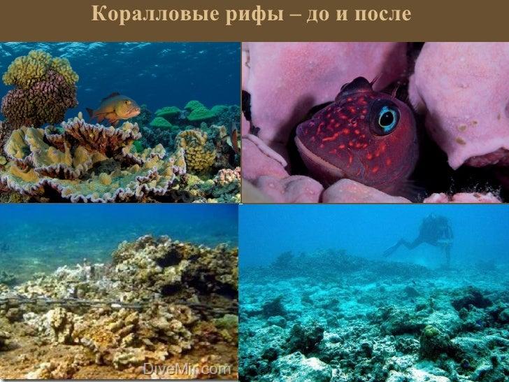 Коралловые рифы – до и после