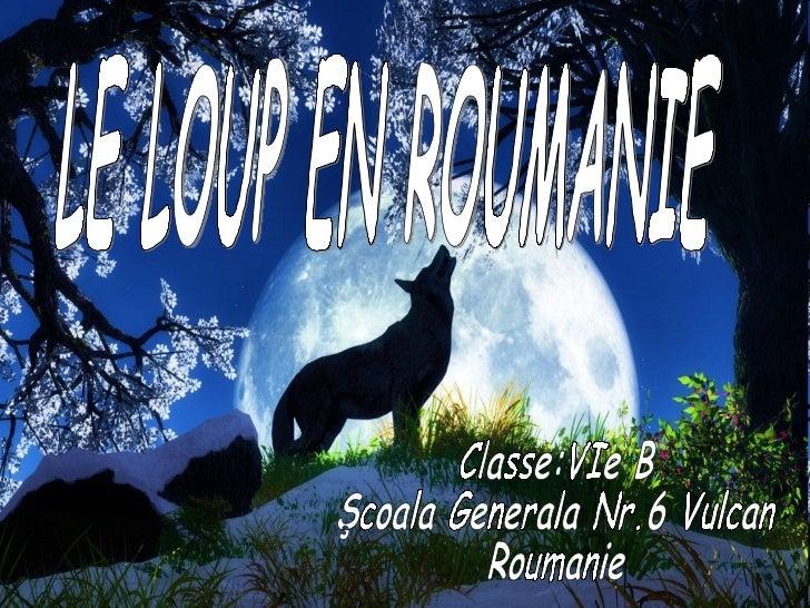 Le loup est l'héros d'innombrables légendes roumaines .       Le loup est l'un des mammifères les plus intelligents.Il pos...