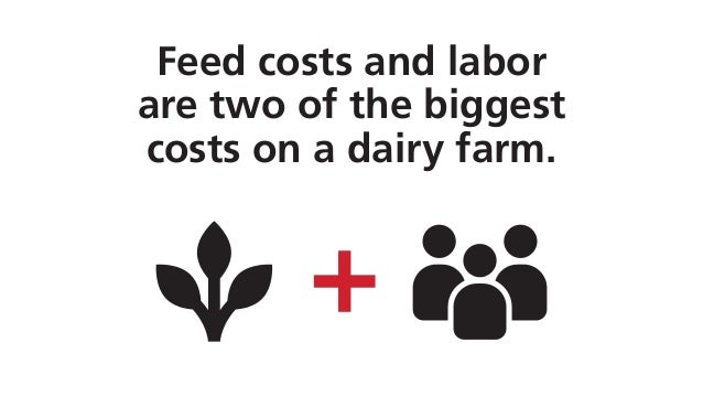 Feed costs and labor are two of the biggest costs on a dairy farm.