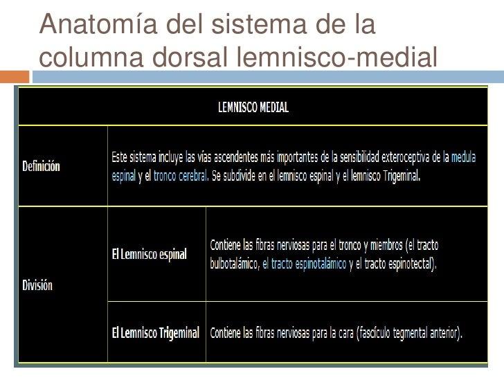 Lemnisco medial