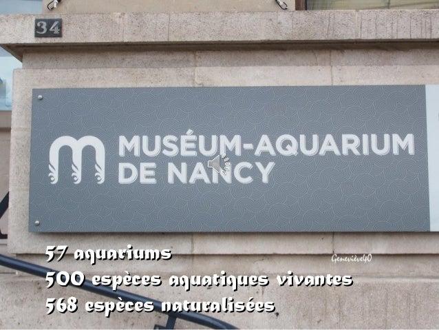 57 aquariums57 aquariums 500 espèces aquatiques vivantes500 espèces aquatiques vivantes 568 espèces naturalisées568 espèce...