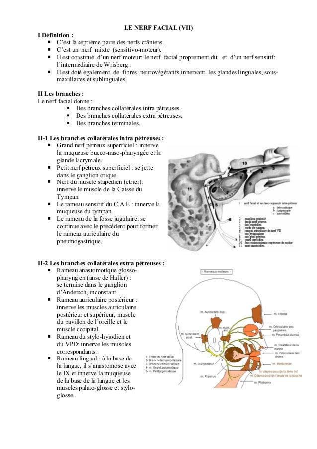 LE NERF FACIAL (VII) I Définition : C'est la septième paire des nerfs crâniens. C'est un nerf mixte (sensitivo-moteur). Il...