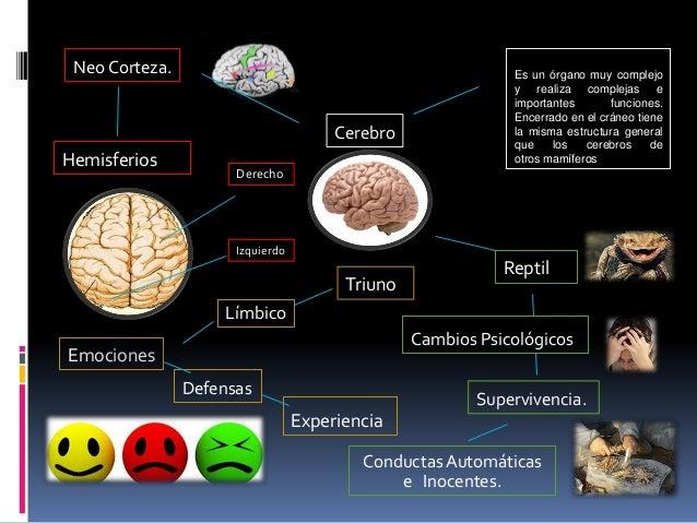 Cerebro mapa conceptual