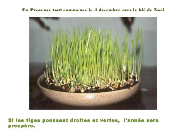 En Provence tout commence le 4 décembre avec le blé de NoëlSi les tiges poussent droites et vertes, lannée seraprospère.