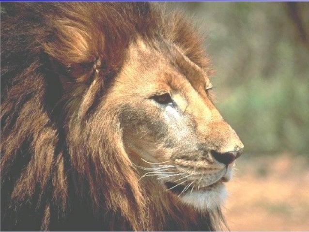 Leo el León El Rey de lasEl Rey de las BestiasBestias