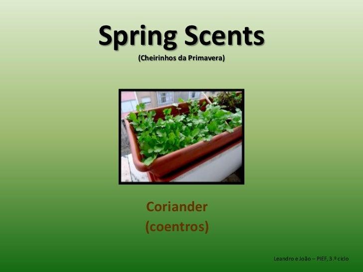 Spring Scents (Cheirinhos da Primavera)<br />Coriander<br />(coentros)<br />Leandro e João – PIEF, 3.º ciclo<br />