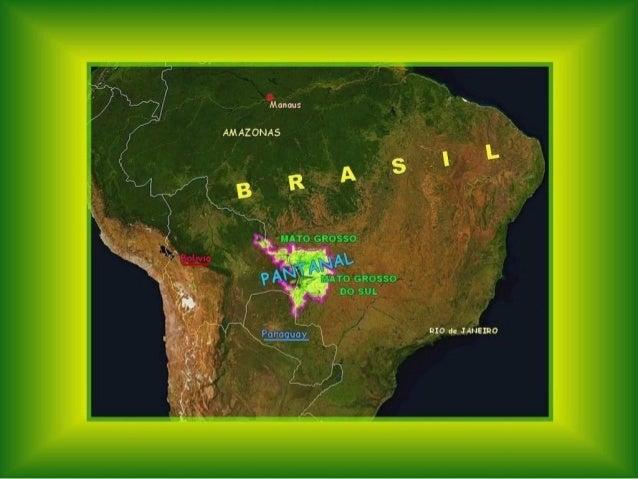 Le pantanal Slide 2