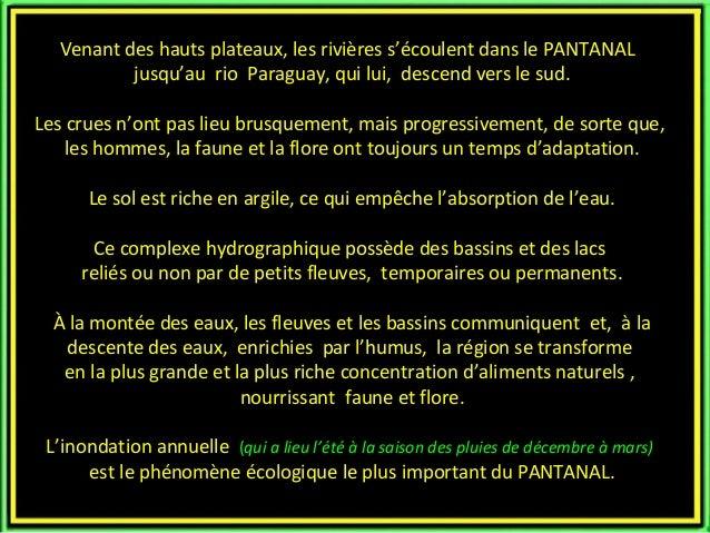 Le pantanal Slide 3