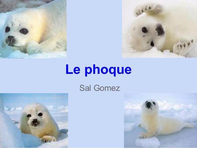 Sal GomezLe phoque