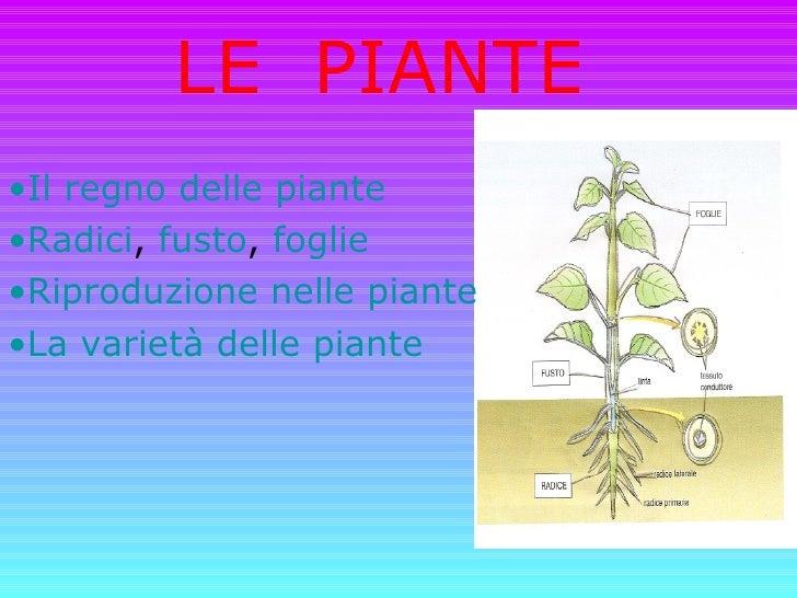 LE  PIANTE <ul><li>Il regno delle piante </li></ul><ul><li>Radici ,  fusto ,  foglie </li></ul><ul><li>Riproduzione nelle ...