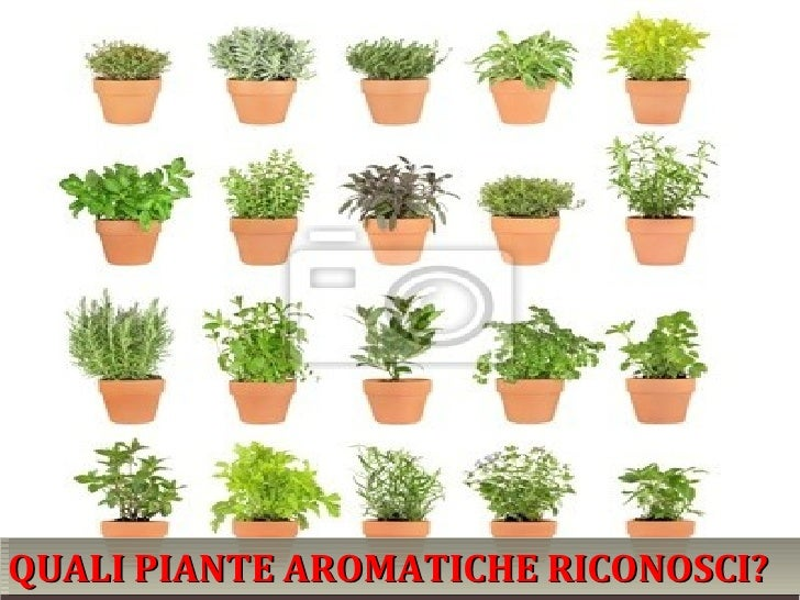 Le piante aromatiche