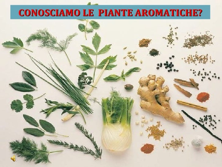 Le Piante Aromatiche : Le piante aromatiche