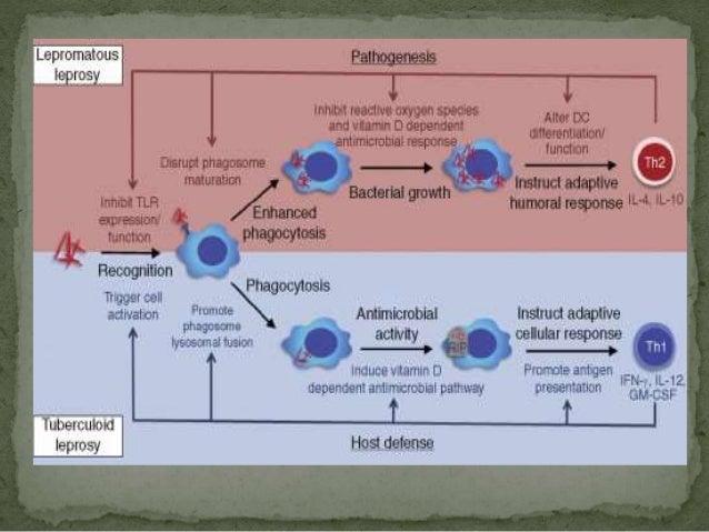  Ridley Jopling  Tuberculoid (TT) Borderline tuberculoid (BT)  Borderline (BB) Borderline Lepromatous (BL)  Lepromatous (...
