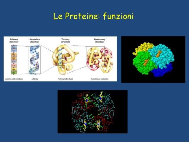 Le Proteine: funzioni