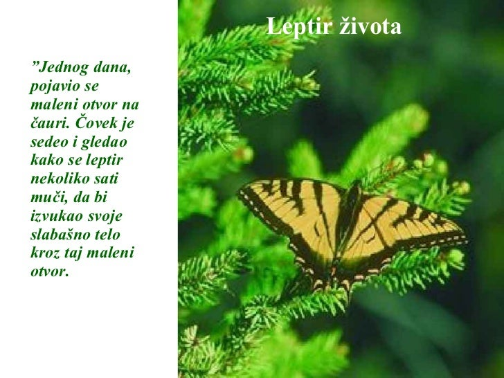 """Leptir života """" Jednog dana, pojavio se maleni otvor na čauri. Čovek je sedeo i gledao kako se leptir nekoliko sati muči, ..."""