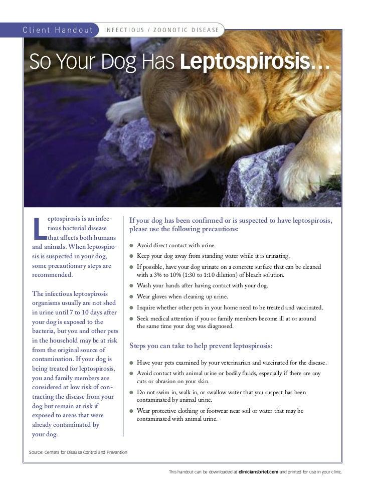 Client Handout                         I N F E C T I O U S / Z O O N OT I C D I S E A S E So Your Dog Has Leptospirosis…  ...