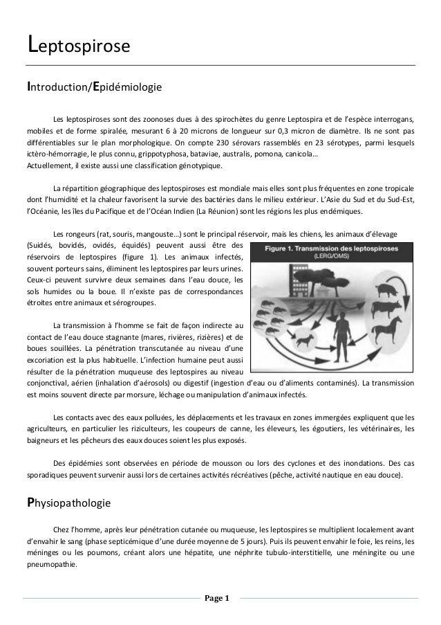 Page 1 Leptospirose Introduction/Epidémiologie Les leptospiroses sont des zoonoses dues à des spirochètes du genre Leptosp...