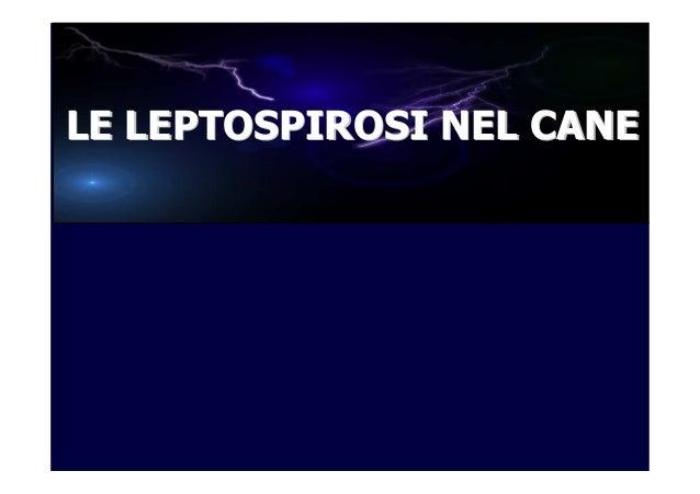 LE LEPTOSPIROSI NEL CANE
