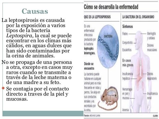 El esquema de la recepción troychatki evalar de los parásitos
