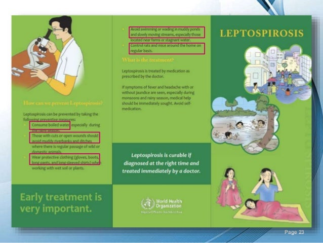 Top leptospirosis powerpoint templates, backgrounds, slides and.