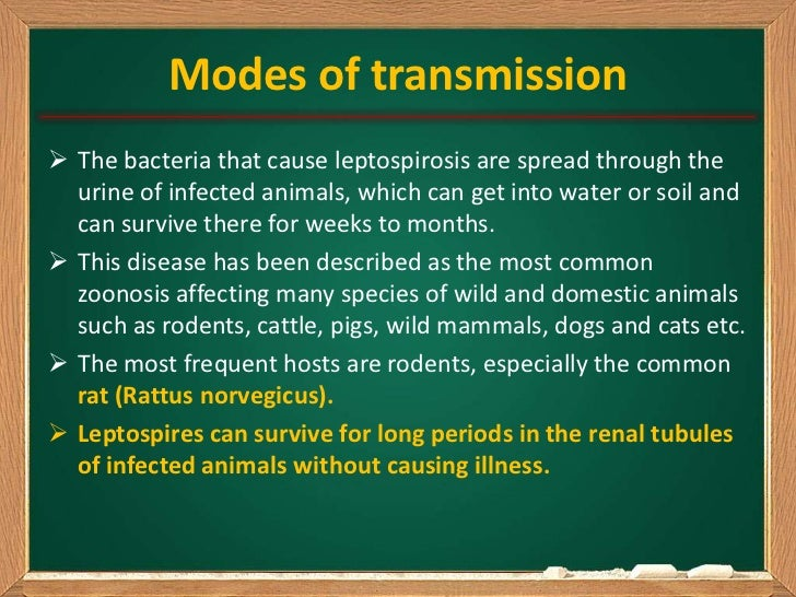 Modes of transmission The bacteria that cause leptospirosis are spread through the  urine of infected animals, which can ...