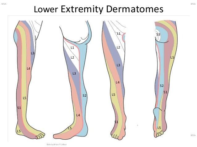 Lower Extremity Regional Anesthesia