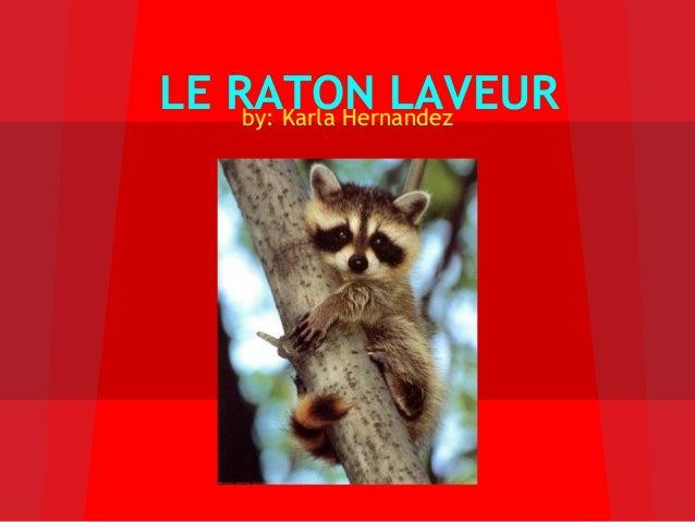 LE RATON LAVEURby: Karla Hernandez